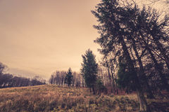 Prairie with tall pine trees Stock Image