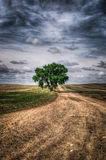 Prairie Tree Royalty Free Stock Images