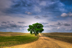 Prairie Tree Stock Photos