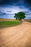 Prairie Tree Stock Images
