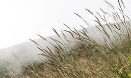 Prairie. Wide prairie isolated on mist background royalty free stock images