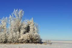 Prairie Winter Landscape. Winter on the Prairies, Frosty trees and room for copy Stock Photos