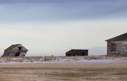 Prairielandschap in de winter Stock Afbeelding