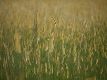 Prairies africaines Photo libre de droits