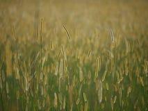 Prairies africaines Image libre de droits