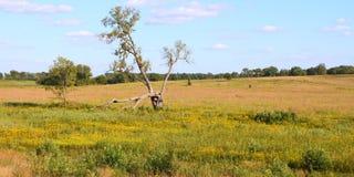Prairies l'Illinois de Nachusa Images stock