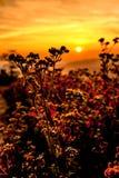 Prairies sur le paysage de lever de soleil Image stock