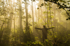 Praise the forest Stock Photos