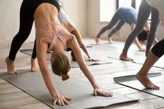 Praktiserande yogakurs för grupp människor, nedåt - vända mot hunden posera arkivbilder