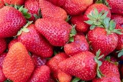Prall, w?hlte Hand Erdbeeren vom Gem?segarten aus; Bauernhofleben Beschneidungspfad eingeschlossen lizenzfreies stockfoto