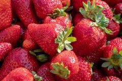 Prall, w?hlte Hand Erdbeeren vom Gem?segarten aus; Bauernhofleben Beschneidungspfad eingeschlossen stockfoto
