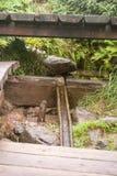 Pramen Vltavy (Vltava river spring) in Sumava Royalty Free Stock Image