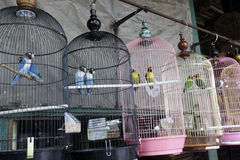 Pramuka bird market, Jakarta Royalty Free Stock Photography