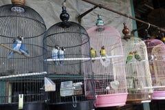 Pramuka-Vogelmarkt, Jakarta Lizenzfreie Stockfotografie