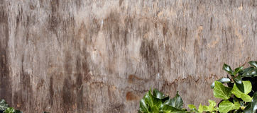 Prancha de madeira Imagens de Stock