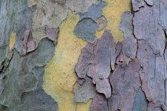 A prancha de madeira de madeira connosco, teste padrão do marrom velho natural envelheceu Imagem de Stock