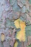 A prancha de madeira de madeira connosco, teste padrão do marrom velho natural envelheceu Imagem de Stock Royalty Free