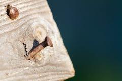Prancha de madeira envelhecida com dois pregos oxidados Fotos de Stock Royalty Free