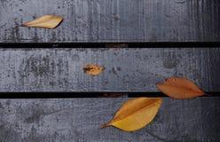 Prancha de madeira escura pintada com folha fotografia de stock royalty free