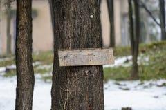 Prancha em um fim da árvore acima, lugar para o texto foto de stock