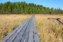 Pranchas de madeira como o caminho através do pântano à floresta conífera, ninguém fotos de stock royalty free