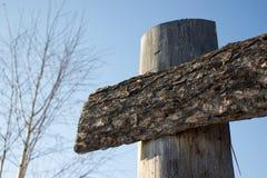 Pranchas do pinheiral Foto de Stock