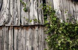 Pranchas velhas Fotografia de Stock