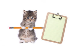 Prancheta bonito de Kitten Holding Pencil With Blank foto de stock