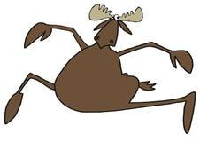 Prancing bull moose Stock Image