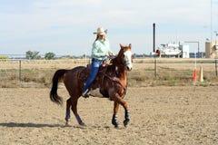 Prancing Horse Royalty Free Stock Image