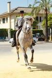 Prancing Horse Stock Image
