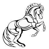 Prancing horse Stock Photo