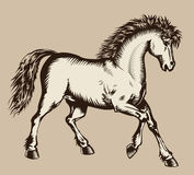Prancing horse woodcut Royalty Free Stock Photo