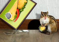 Prankish chipmunk broke picture Royalty Free Stock Images
