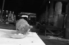 Pranzare gatto Fotografia Stock