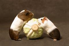 Pranzo dei maiali Fotografia Stock