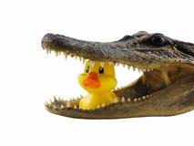Pranzo del coccodrillo Fotografie Stock Libere da Diritti