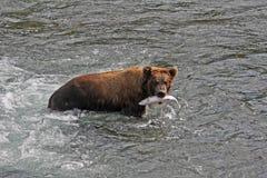 Pranzo dell'orso immagini stock libere da diritti