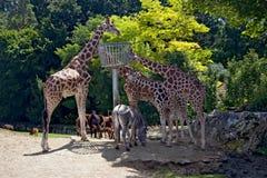 Pranzo in un giardino zoologico immagini stock