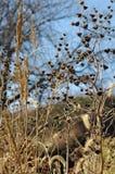 Prarie Flowers. Nebraska wildflowers and plants on the Salt Creek river bed, eastern Nebraska Royalty Free Stock Image