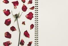 Prasa suszący róża kwiatu płatki na notatnik stronie z kopii przestrzenią, rocznika brzmienie Zdjęcia Stock