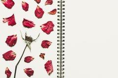 Prasa suszący róża kwiatu płatki na notatnik stronie z kopii przestrzenią, rocznika brzmienie Zdjęcie Stock