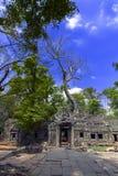 Prasat Ta Prum Old Trees Royalty-vrije Stock Afbeelding