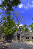 Prasat Ta Prum Old Trees. Royalty Free Stock Image