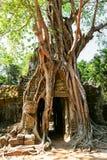 Prasat Ta Prum or Ta Prohm Temple complex, near Siem Reap, Cambodia. Royalty Free Stock Image