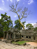 Prasat Ta Prum. Tree and Ruins. Stock Image