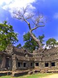 Prasat Ta Prum. Tree and Sky. Stock Photo