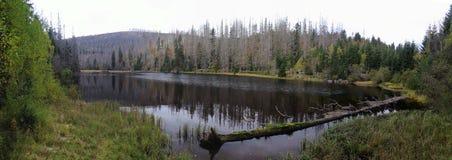 Prasilske湖在Sumava国家公园 免版税库存图片