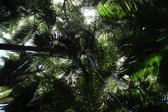 Praslin-Insel, Seychellen, Afrika Lizenzfreies Stockfoto