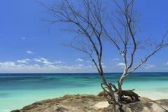 Praslin Seychelles Image libre de droits